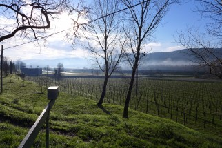 Friuli 3