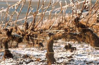 wijn-winter