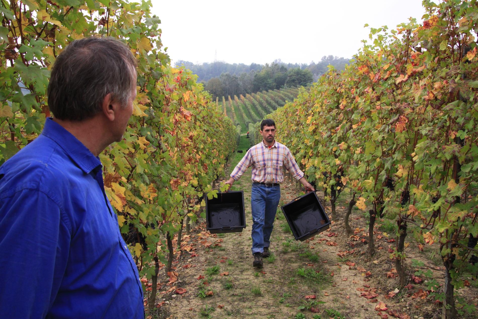 Gian & Ale (Vendemmia 2009)
