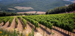 wijngaard Mastrojanni